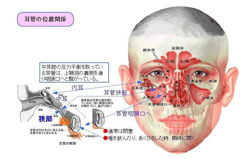 耳管位置図