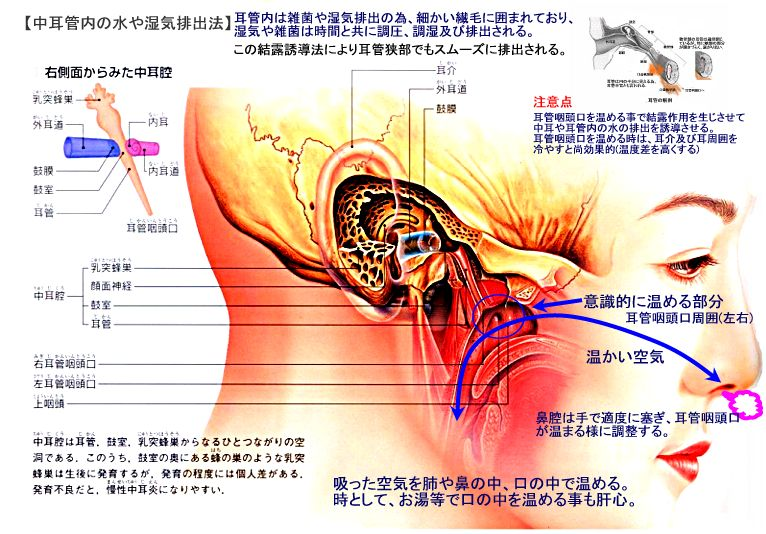 乳 突 蜂巣